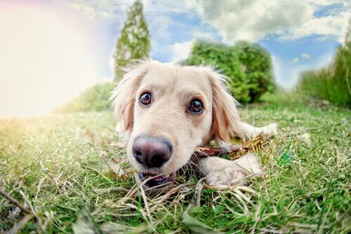 Verão do cão