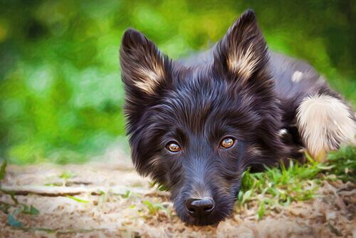Quais são as vantagens dos cães mestiços?