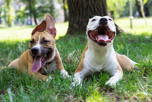 A Lagarta do Pinheiro: um perigo mortal para o seu cão