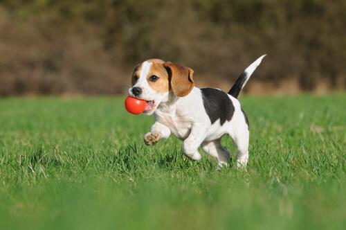 Como evitar a obesidade canina