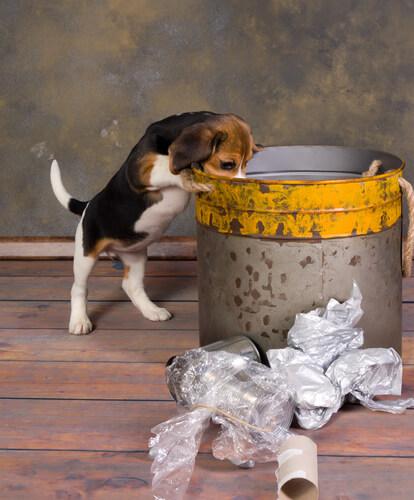 Cachorro fuçando a lata de lixo