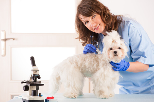 Como dar comprimidos aos cães?