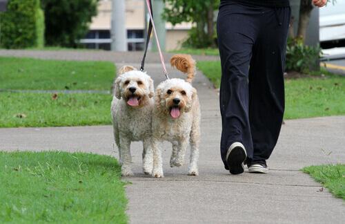 Como passear com um cão: Os primeiros passeios