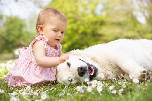 As influências de um cão na criação de um bebê
