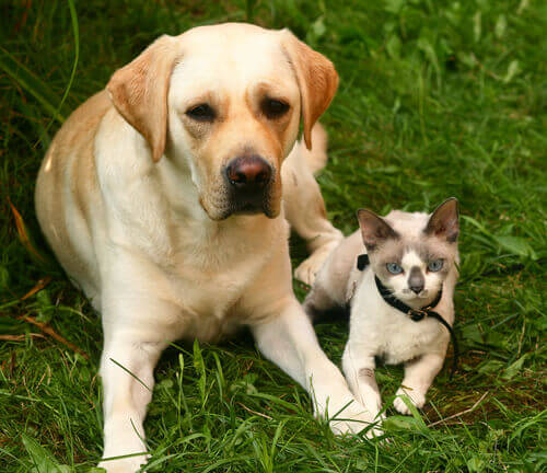 Como prevenir a alergia aos animais de estimação