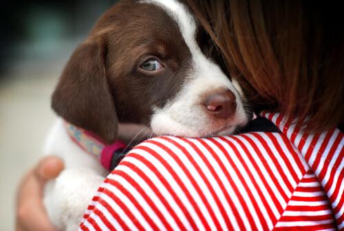 Conselhos para adestrar cães tímidos