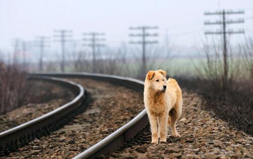 O que é um cão vagabundo?