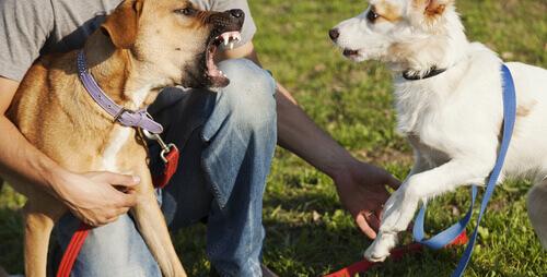 Conselhos para resolver as brigas dos animais domésticos