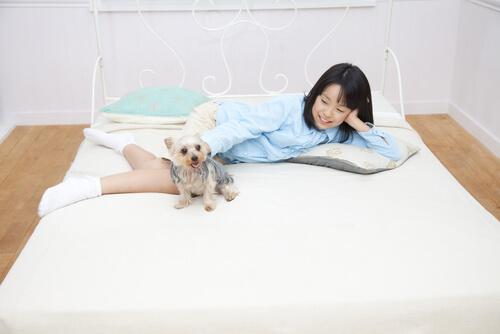 dormir-com pets 3