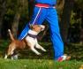 exercício-cão