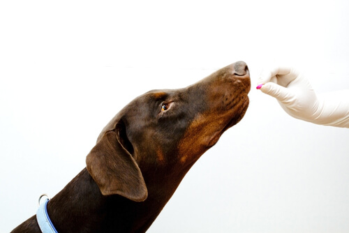 Como dar comprimidos para o seu cão?