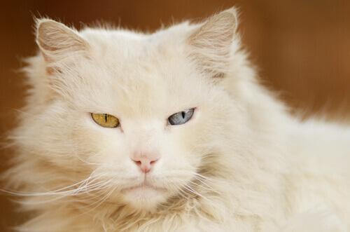 Albinismo, uma falha genética