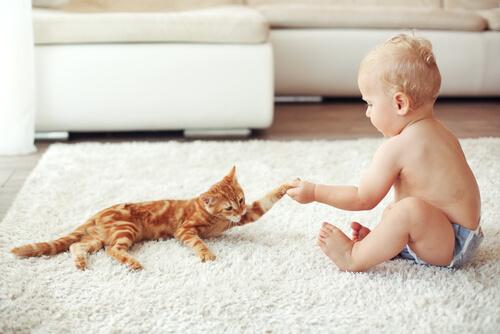 Amizade entre gatos e crianças