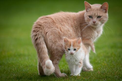 O instinto materno em gatos