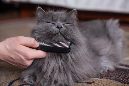Como escolher o melhor pente para o seu gato
