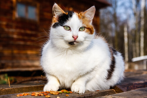 ebe2bdfd4e1 Sinais de envelhecimento em seu gato - Meus Animais