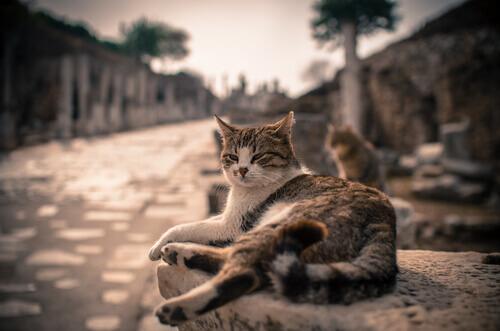 De onde vêm os gatos? Desde quando eles estão junto a nós?