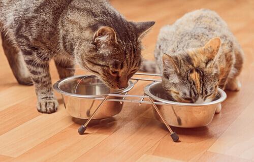 A palatabilidade do gato