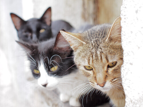 Fukuoka: a ilha dos gatos
