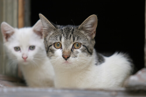 Como alimentar um gato com diarreia