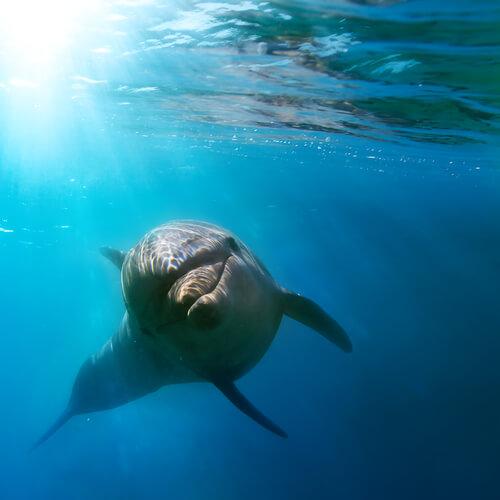 O perigo que o plástico representa para o ecossistema marinho