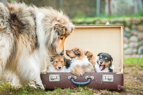 Malas velhas que você pode reciclar como cama para o seu cão