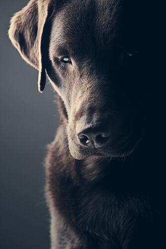 Maus tratos a animais podem contribuir para que seus comportamentos fiquem agressivos