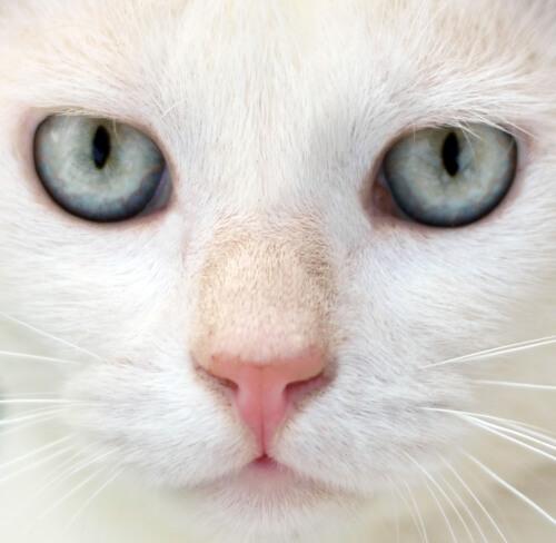 Mitos e verdades sobre os gatos