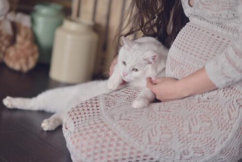 Como preparar o seu gato para a chegada do bebê
