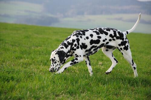 Exercícios de olfato para o seu cachorro… desenvolva todo o seu potencial!