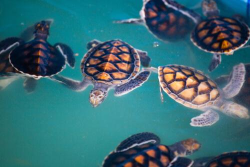 Os plásticos nos oceanos matam 1,5 milhões de animais anualmente