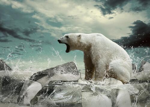 O inimigo número 1 das espécies ameaçadas de extinção