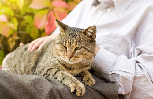 Como identificar gatos idosos