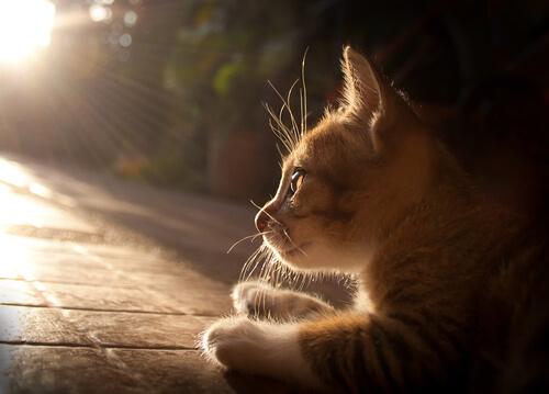Cuidando da saúde dos gatos