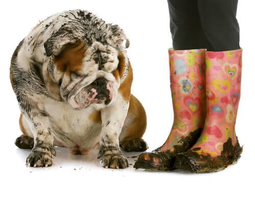 Cão com mau cheiro