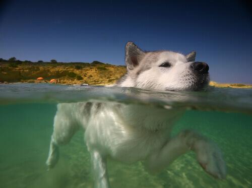 Natação: 8 razões para o seu cão nadar