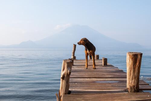 A relação entre os cães e a natação