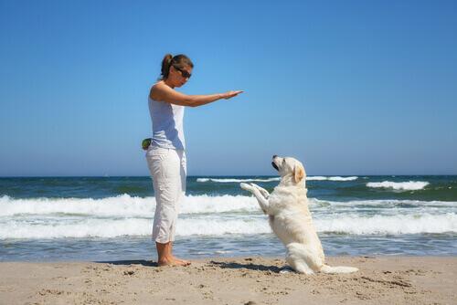 A educação dos cães: obediência