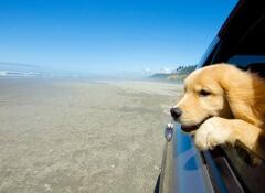 cão-viagem