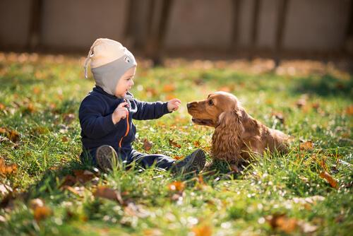 Quando as crianças pedem um animal de estimação...