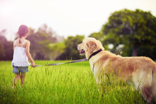Quando uma criança pede um cão aos pais