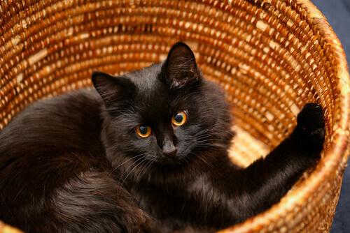 Cama para gatos feita à mão