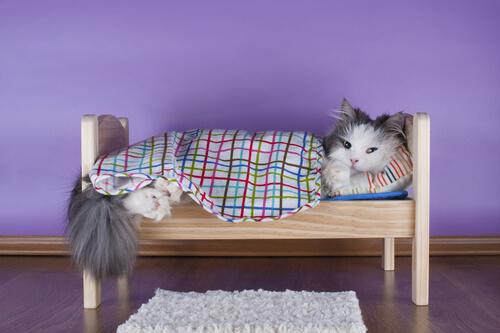 Aprenda a fazer camas caseiras para seus gatos
