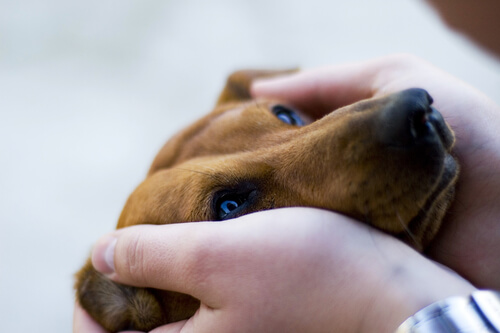 Estudo descobre que cães preferem carícias à elogios
