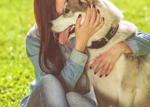 O comportamento dos cães