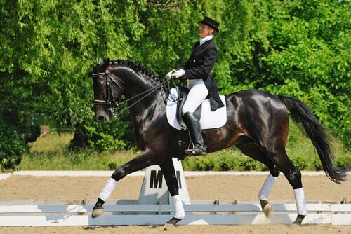 A doma clássica de cavalos, um espetáculo!