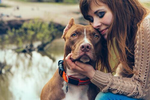 Amor: donos e seus cachorros Vs mães e seus filhos