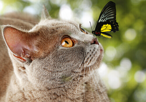 A inteligência dos gatos: Saiba se o seu gato é inteligente ou não