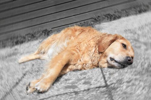 Medicamentos humanos proibidos para cachorros