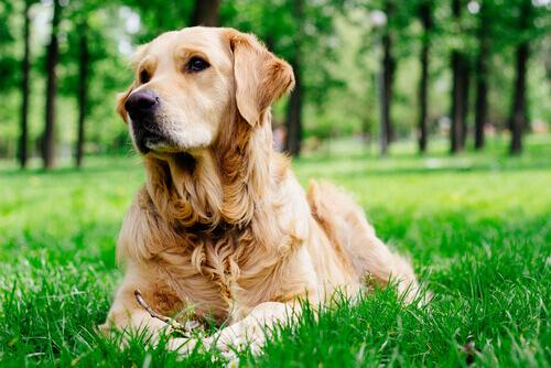Conheça as fases do cio das cadelas